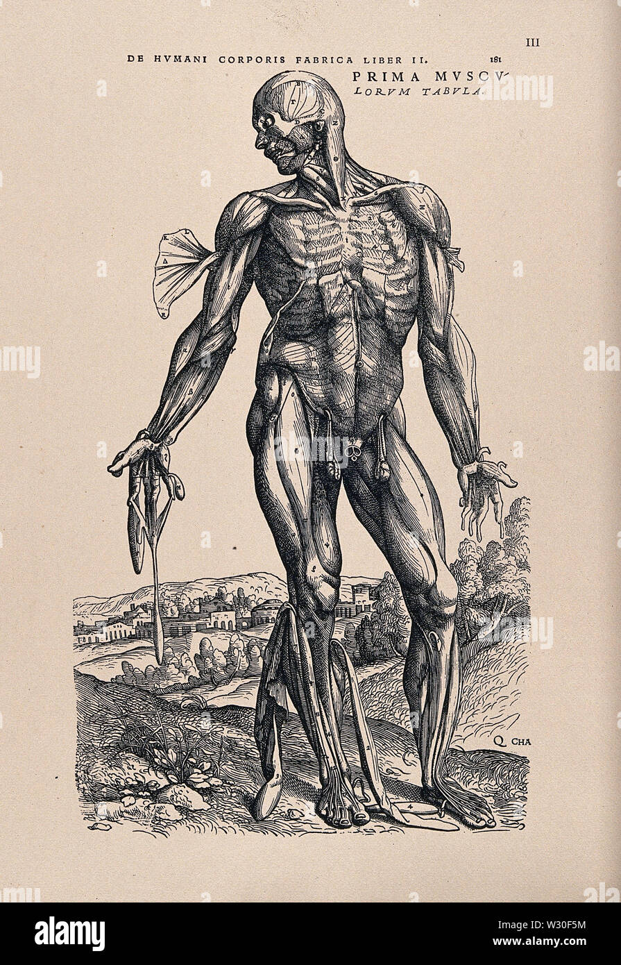 Muscleman, in a landscape, seen from the front. Photolithograph, 1940, after a woodcut, 1543. - Stock Image