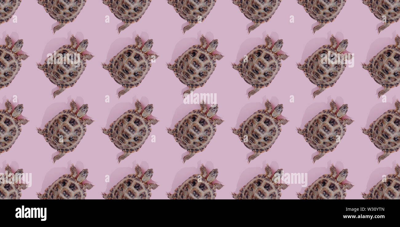 Turtle on pink background trend flat lay concept with fashionable toning. Many turtles pattern - Stock Image