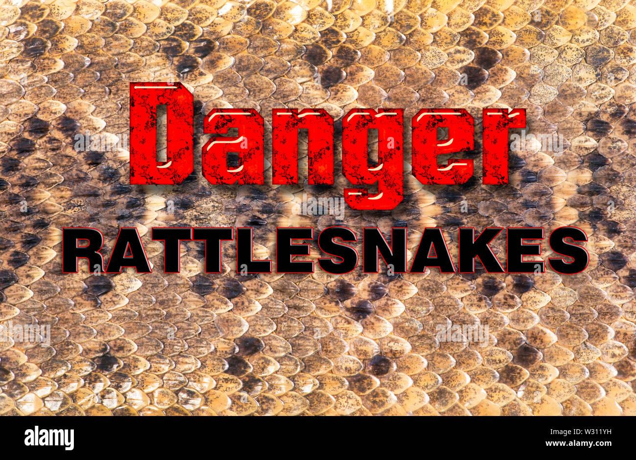 Texas diamondback rattlesnake skin will make for great background. - Stock Image