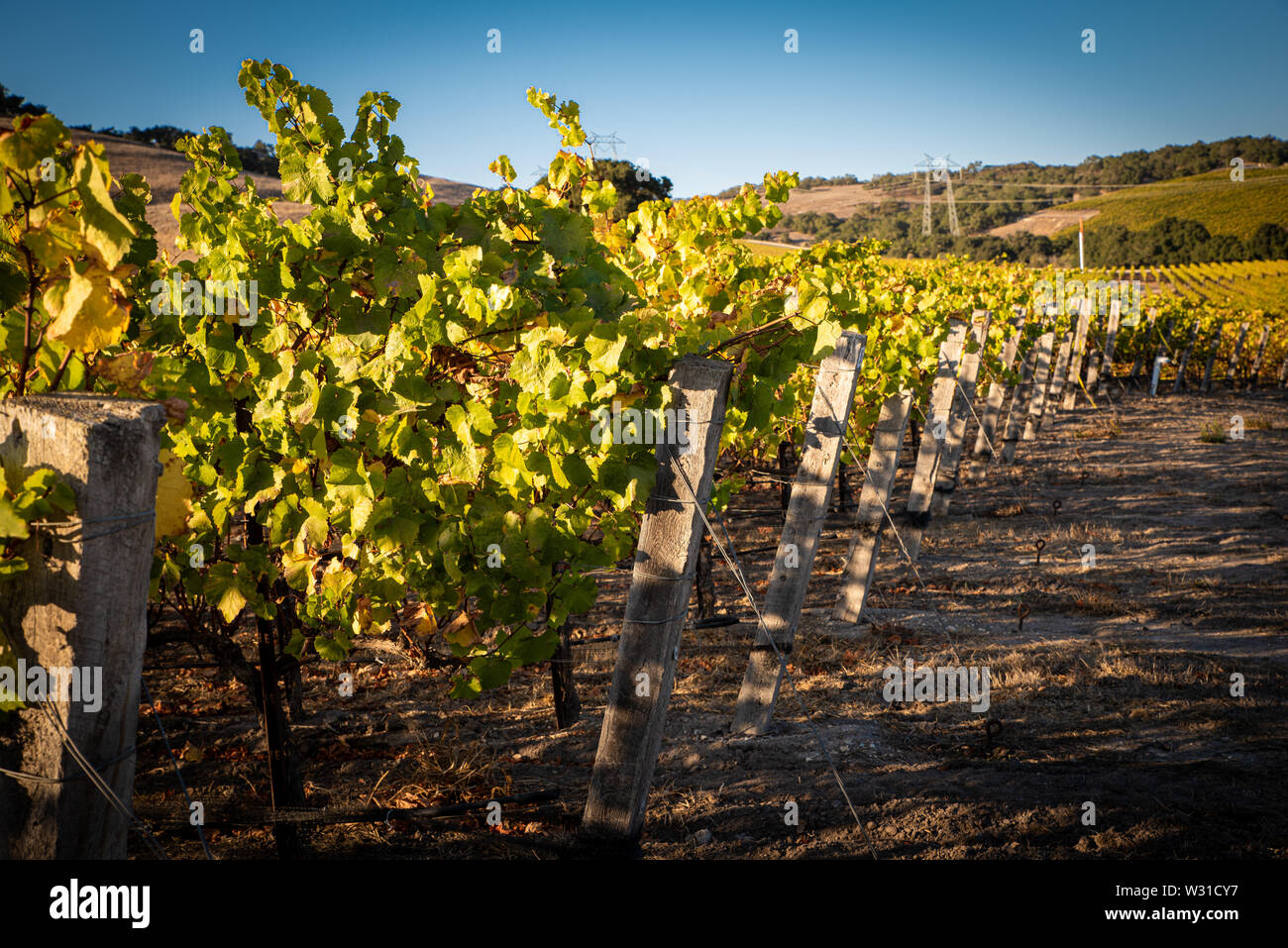 A vineyard in central California Stock Photo