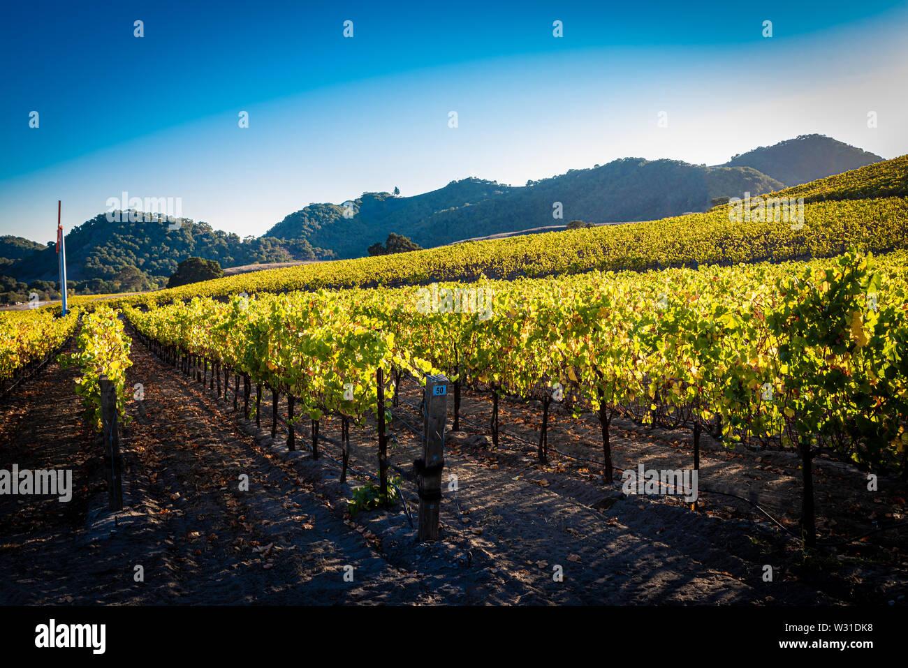 A vineyard in central California Stock Photo