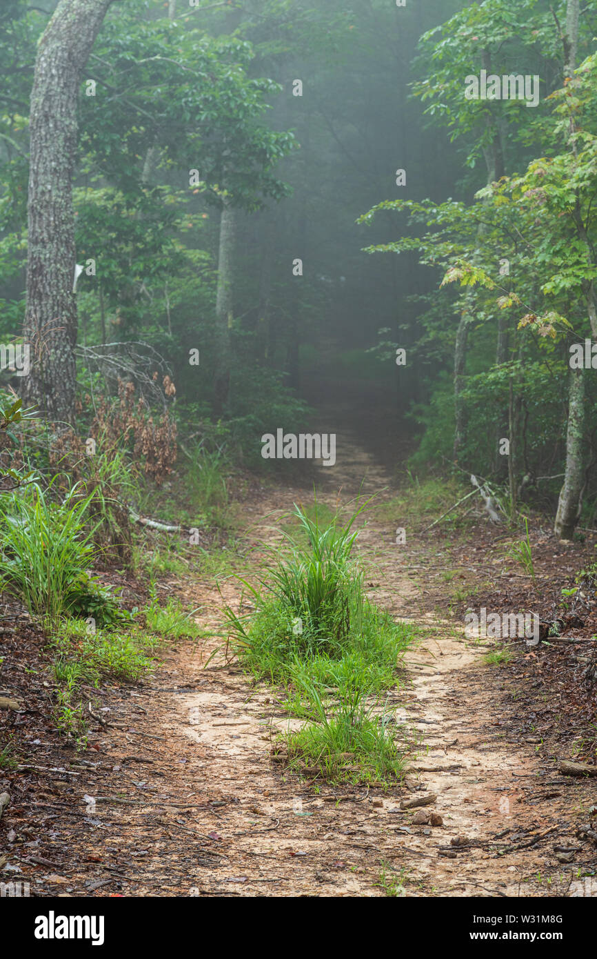 Pathway through the woods in mist. - Stock Image