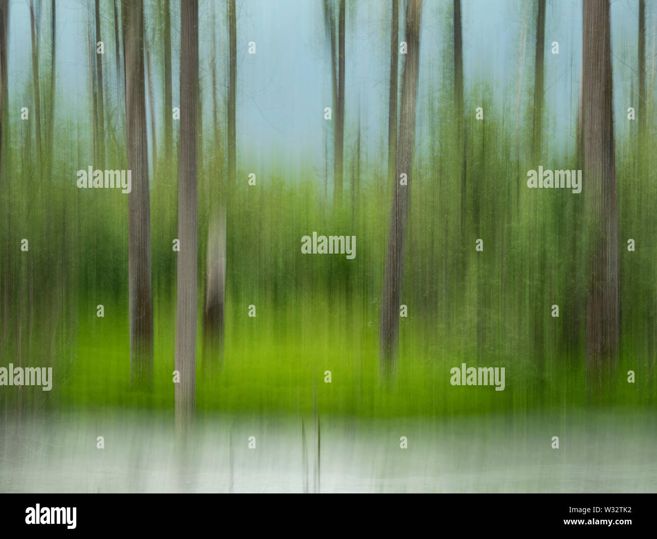 In-camera motion blur of forest and stream near Valdez in Southcentral Alaska. - Stock Image