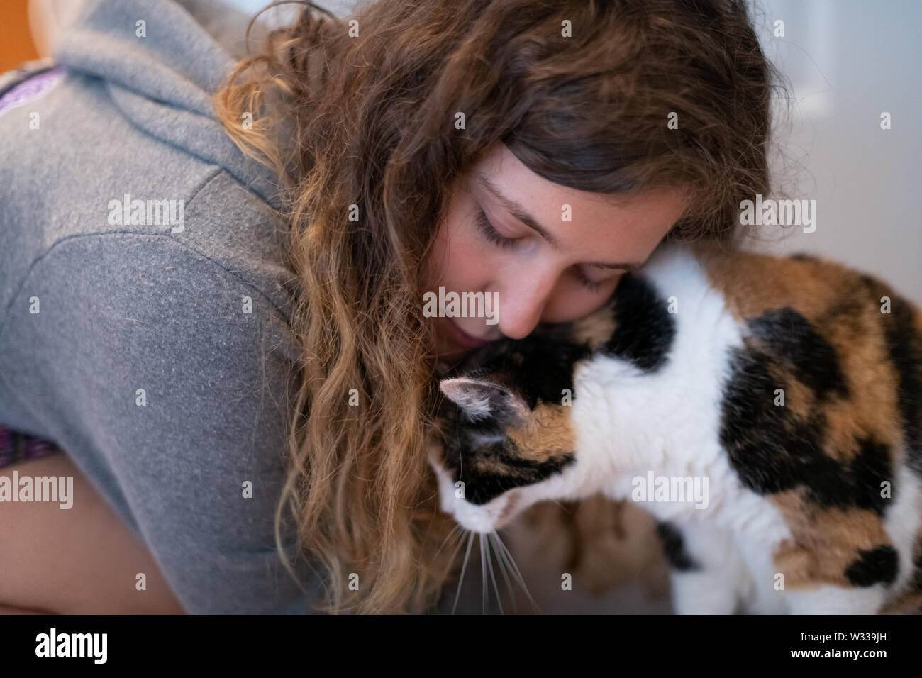 Closeup portrait of happy young woman bonding with calico cat pet companion, bumping rubbing bunting heads, friends showing affection - Stock Image