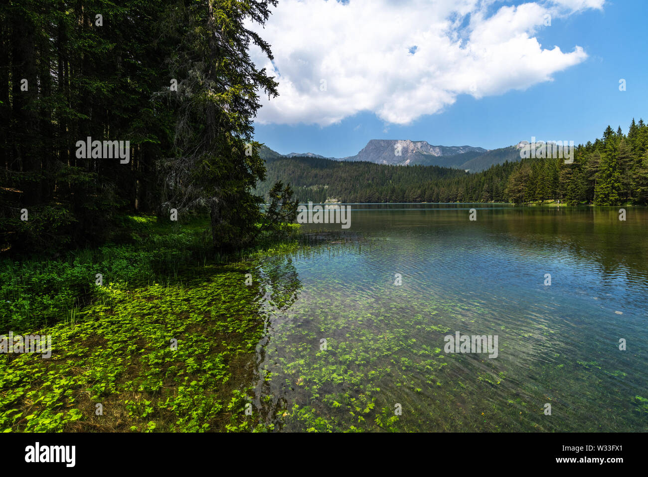 Montenegro, Black Lake in a Durmitor Park - Stock Image