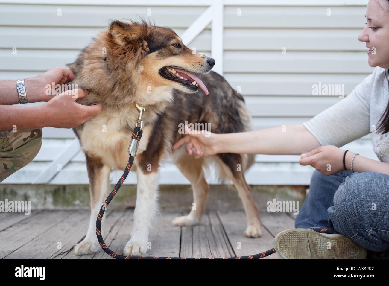 Photo of side of sitting woman in jeans and white sweater stroking dog on leash against background of white wooden wall on street - Stock Image