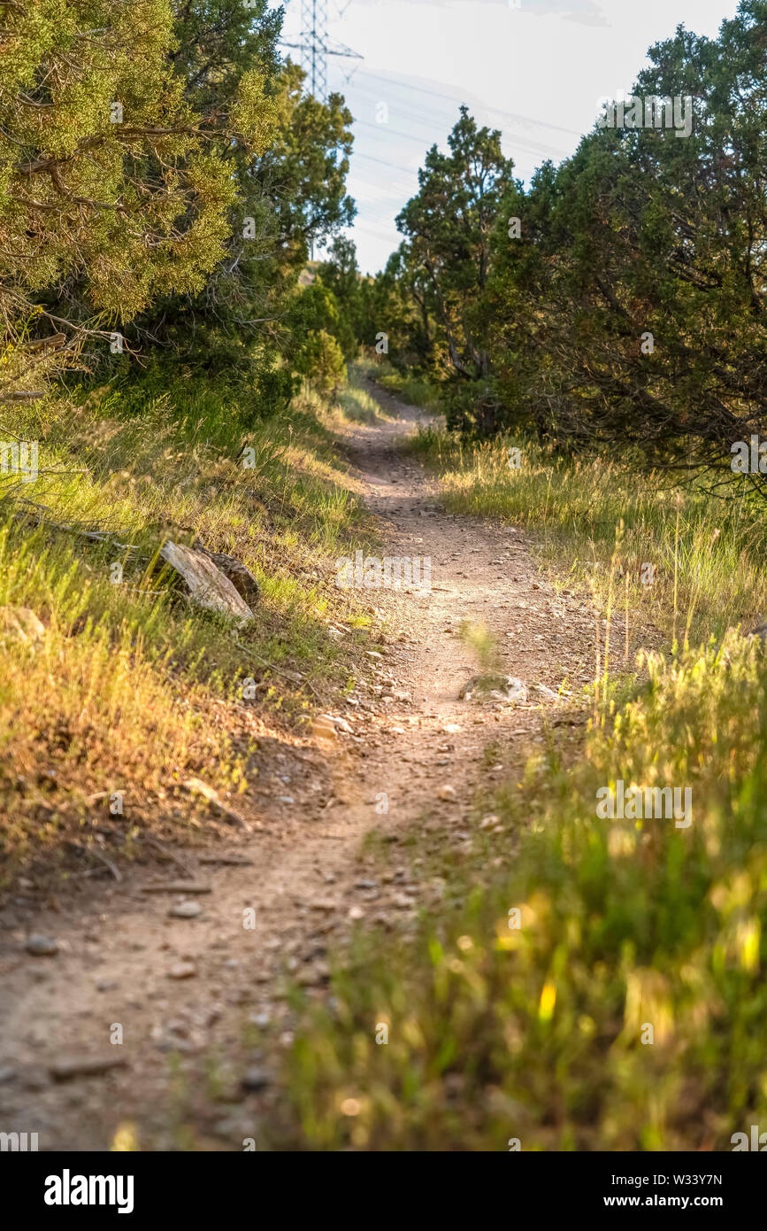 Close up of a sunlit and narrow dirt road in the forest on a sunny day. The hiking trail runs amid grasses and and trees with lush green leaves. Stock Photo