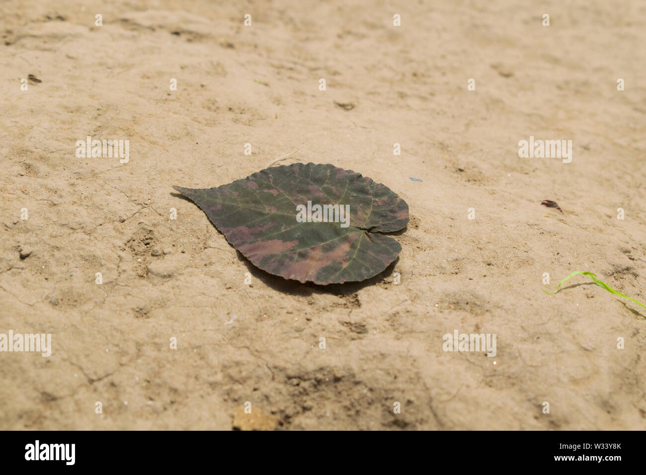 close up of a dried leaf with blurred background,close up of dry leaf on earth. Stock Photo
