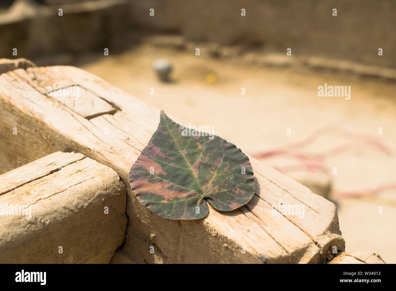 close up of a dried leaf with blurred background,dry leaf on a wooden structure. Stock Photo
