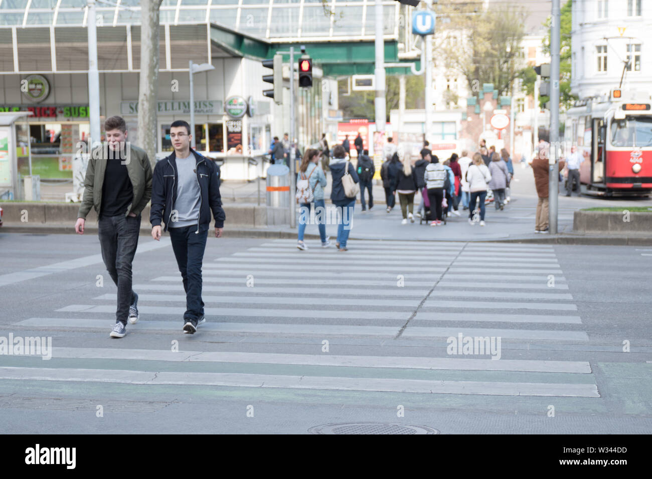 People crossing the street, taking public transport, walking their dogs and riding bicycles, traffic, zebra crossing in Vienna, Europe, Austria - Stock Image