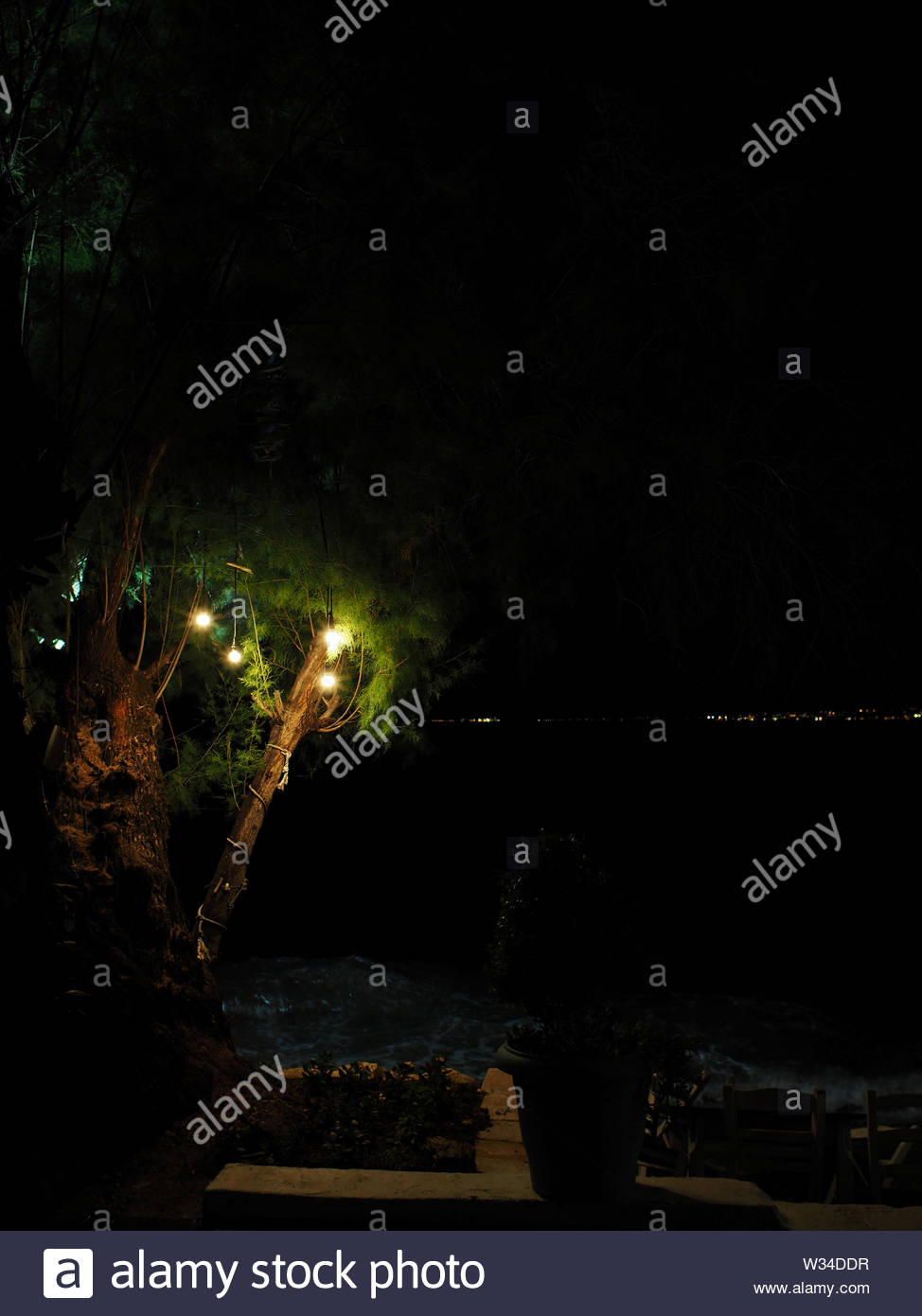 decorative electric bulbs attached on tree branch at night - Stock Image