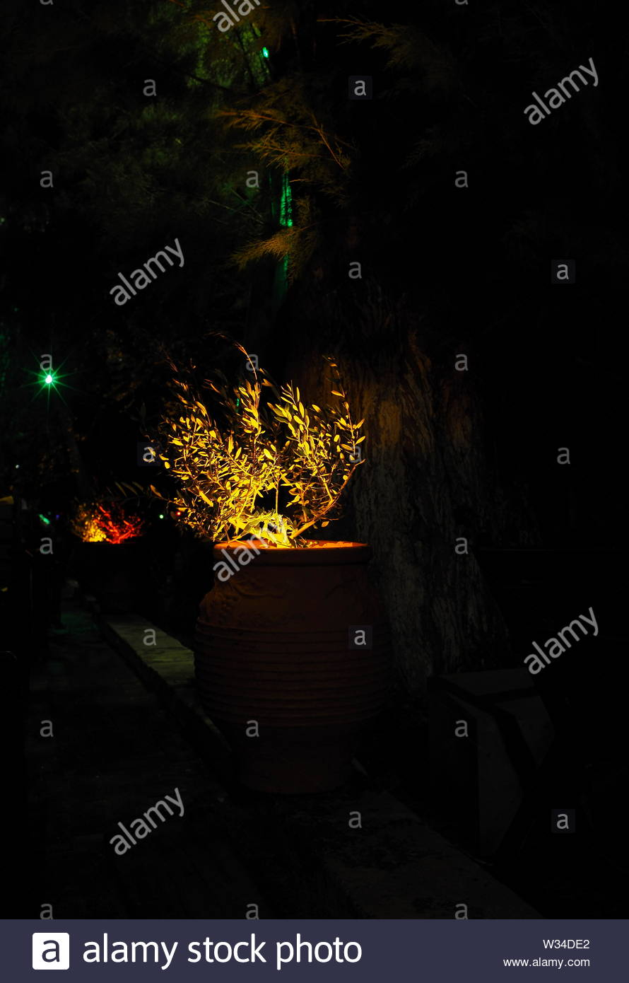 decorative plant in a clay pot at night - Stock Image