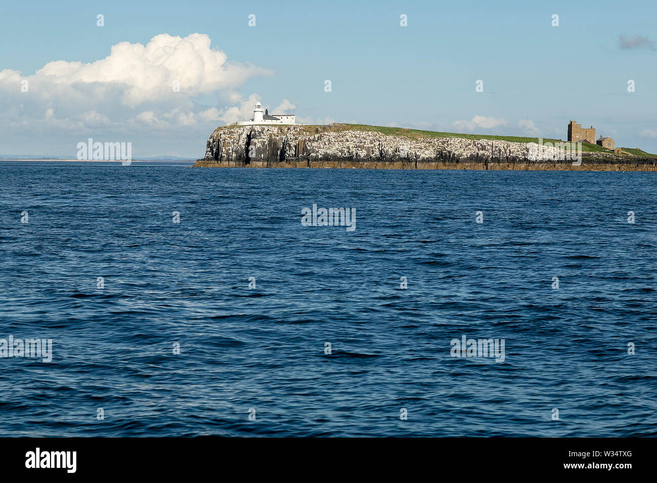 Farne Islands, Northumbrian Coast. UK. Sea, sea birds, puffins and lighthouse Stock Photo