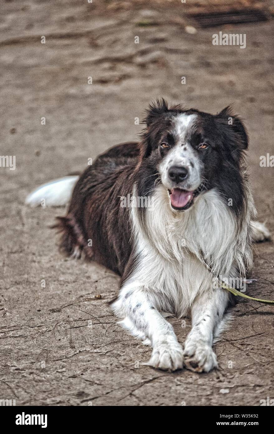 A closeup of a dog laying on the ground at the park - Stock Image