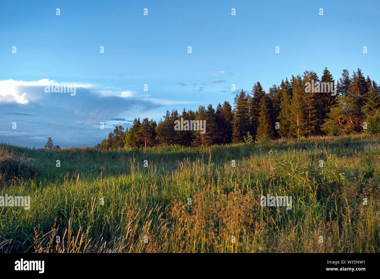 Summer meadow landscape with green grass and wild flowers on the background of a forest, sky and mountains. - Stock Image