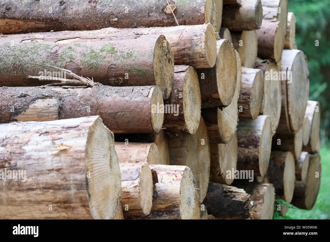 Chopped wood logs stacked in pile at forest - Stock Image