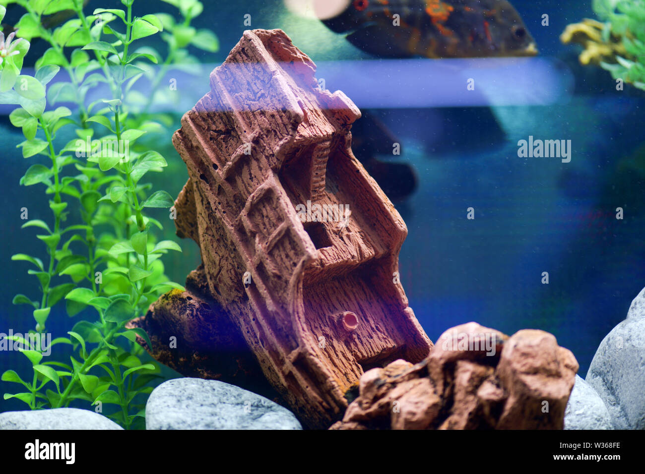 Beautiful and creative design of the aquarium-sunk ship on a blue background. Horizontal photography - Stock Image