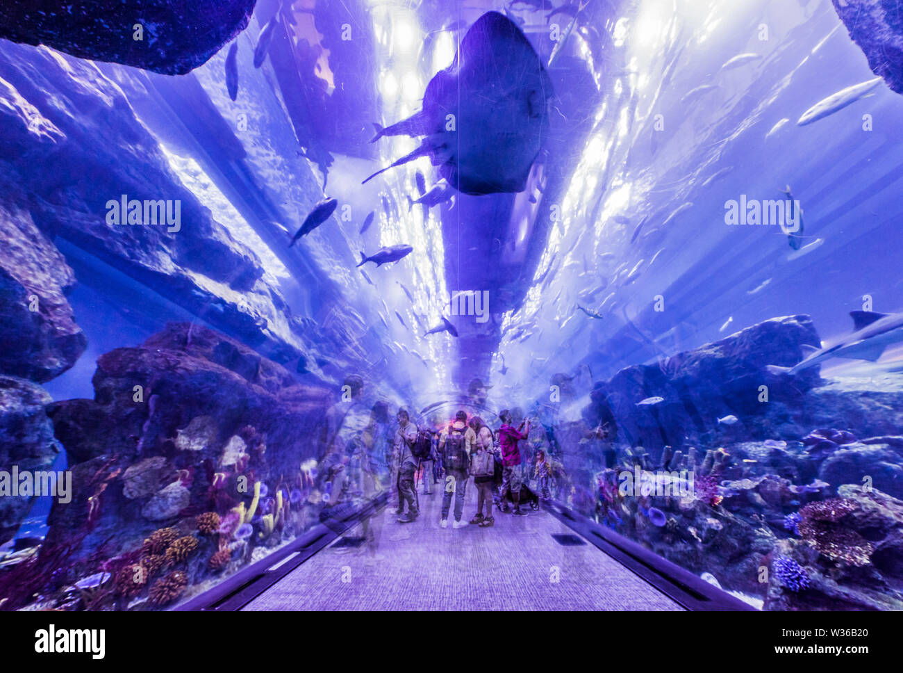 Whoever visits the city of Dubai hasn`t to miss the huge Dubai Aquarium, with a capacity of 10 million liters of water, and the underwater zoo that ho - Stock Image