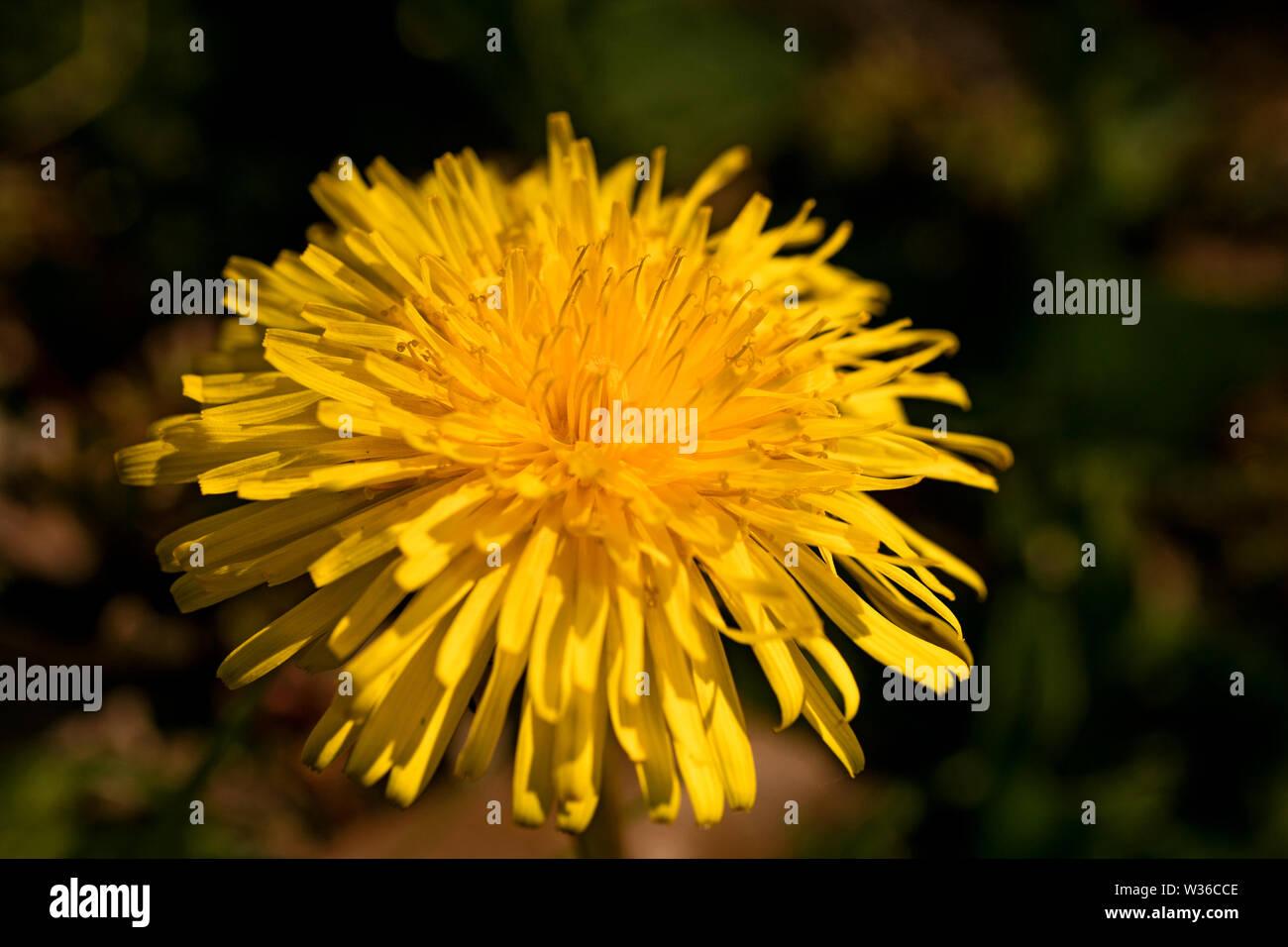 Yellow macro flower background wallpaper high quality prints fine art. Stock Photo