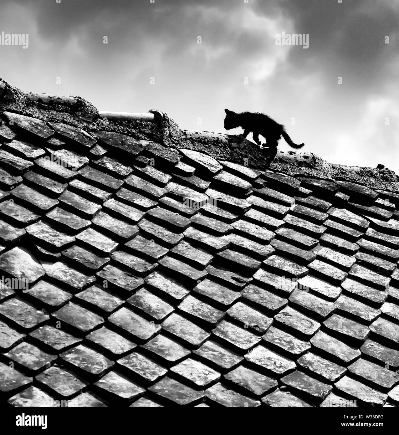 A black and white photograph of a black alley kitten walking on a shingle rooftop on a cloudy day. - Stock Image