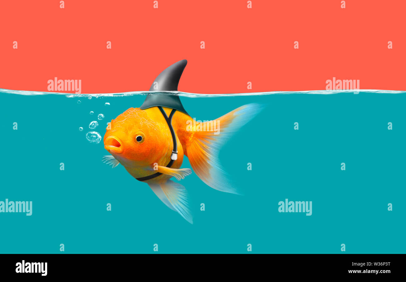 Goldfish with shark fin swim in green water and red sky, Gold fish with shark flip . Mixed media - Stock Image