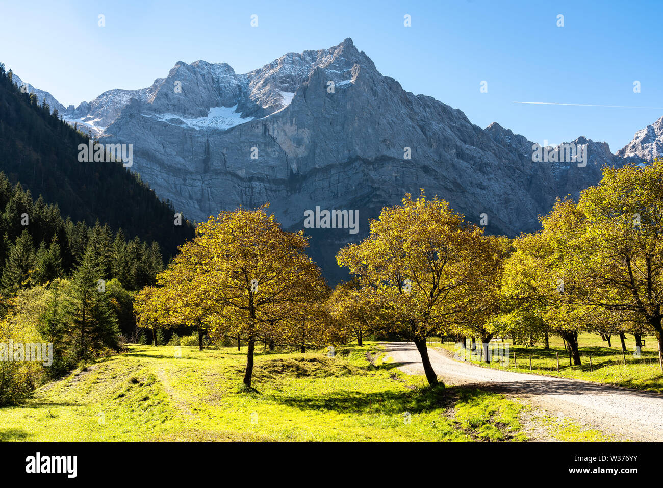 Autumn view of the maple trees at Ahornboden, Karwendel mountains, Tyrol, Austria - Stock Image