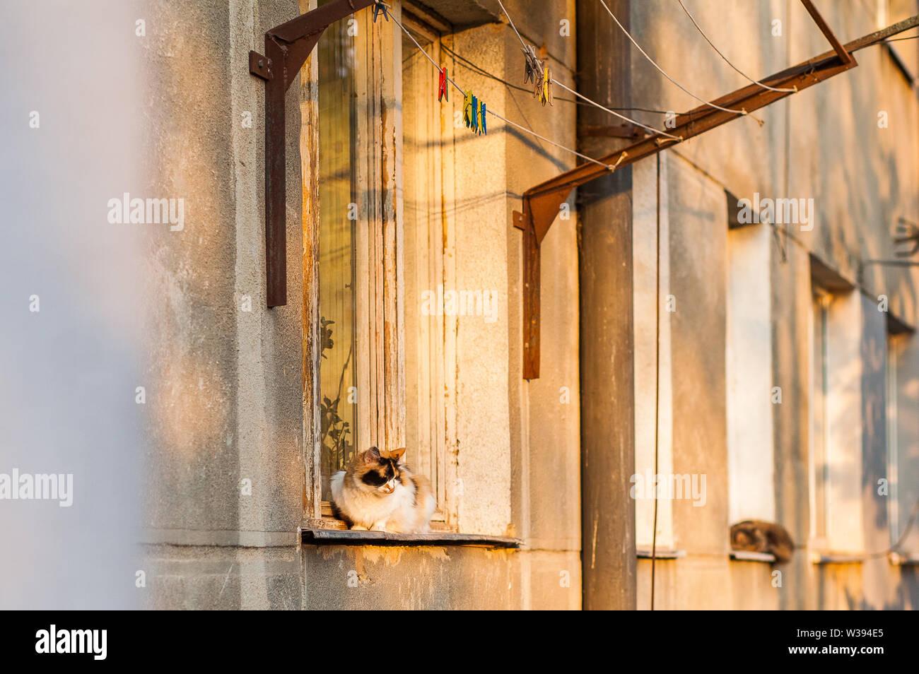 Striped cat strolling along the street window sill. - Stock Image