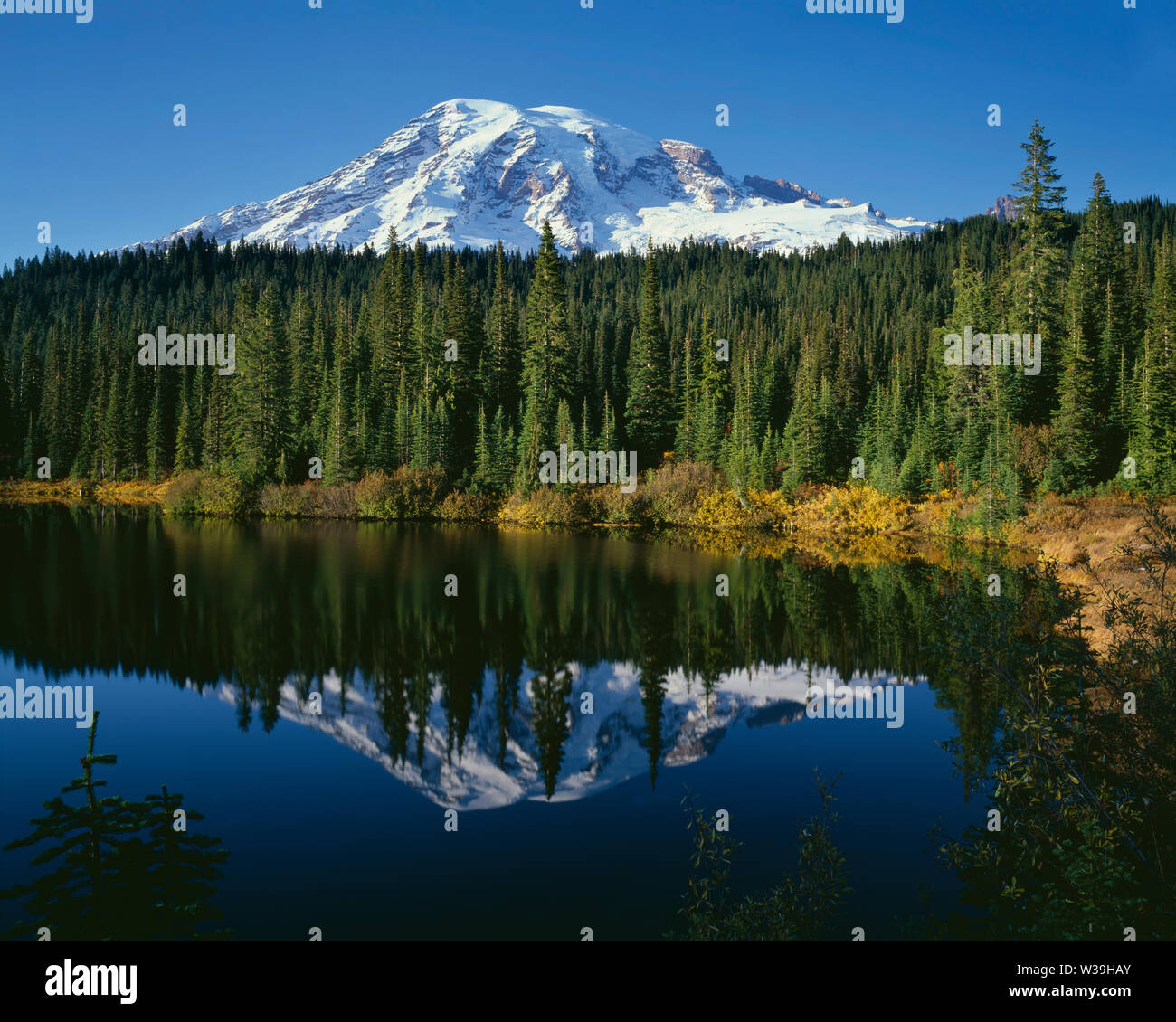 USA, Washington, Mt. Rainier National Park, Mt. Rainier with fresh autumn snow and fall-colored willows and huckleberries reflects in Reflection Lake. - Stock Image
