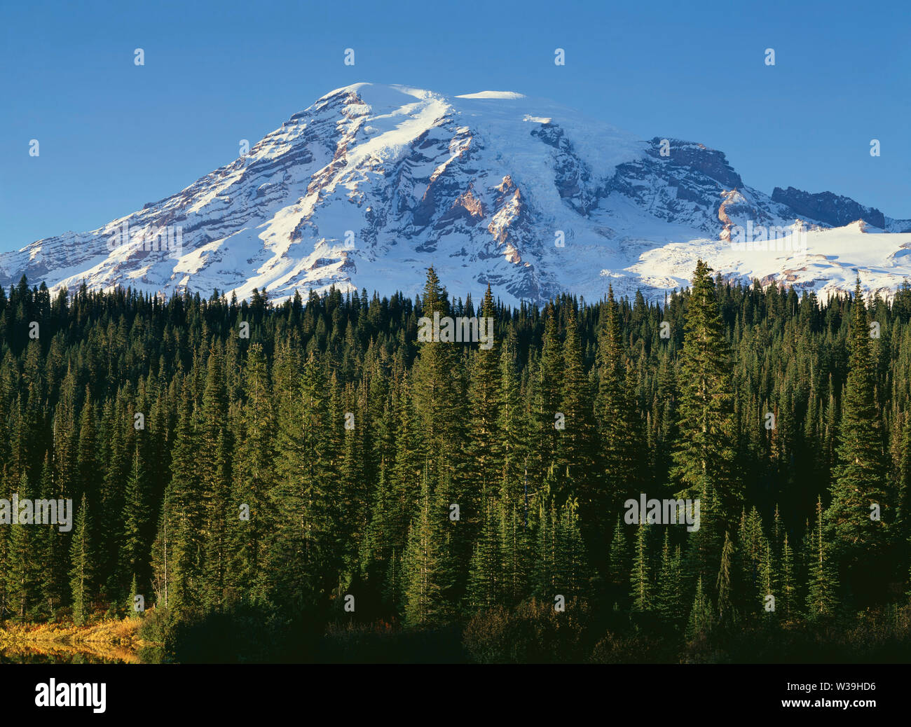 USA, Washington, Mt. Rainier National Park, Mt. Rainier with fresh autumn snow rises above evergreen forest at Reflection Lake. - Stock Image