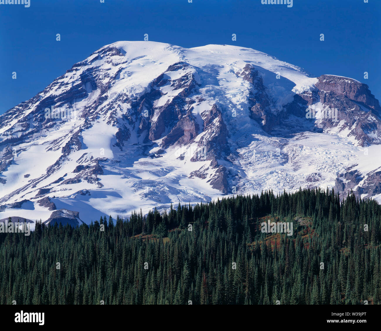USA, Washington, Mt. Rainier National Park, South side of Mt. Rainier rises about 10,000 ft. above evergreen forest in autumn. Stock Photo
