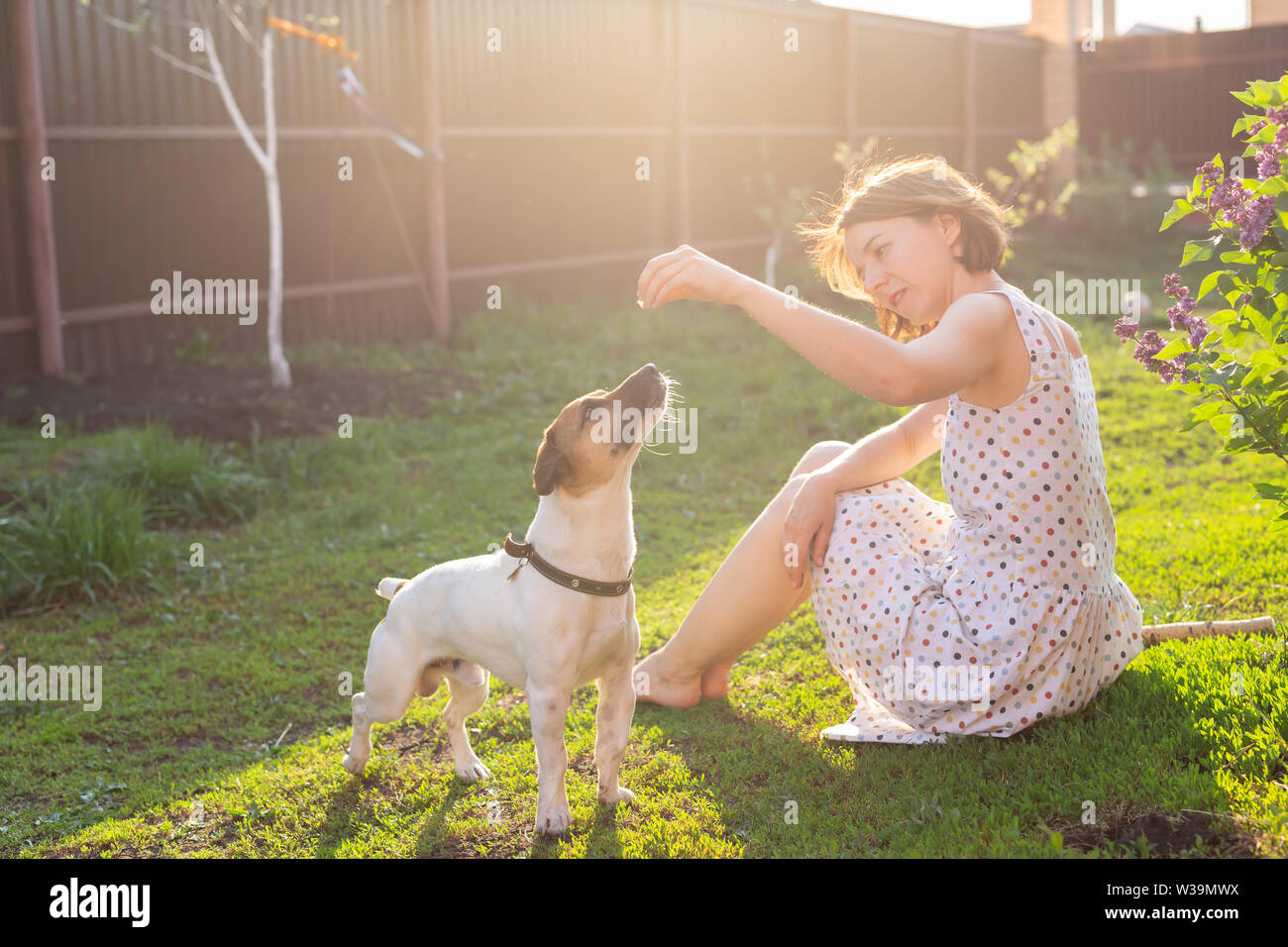 Positive cheerful woman playing with her beloved dog Jack Russell Terrier in the yard of her country house on a sunny summer day. Concept of love for - Stock Image