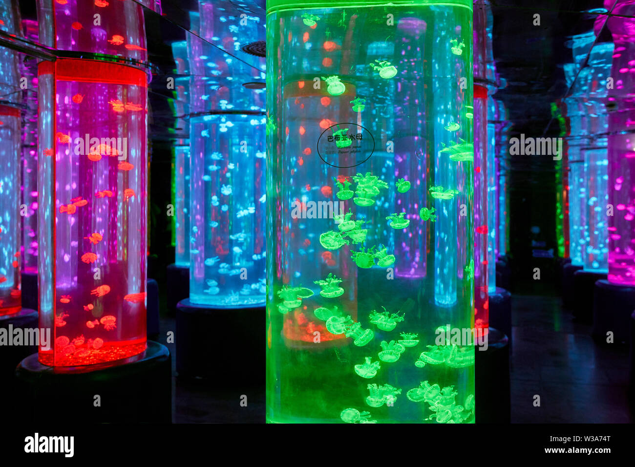 Colorful tanks with jellyfish in Dream Aquarium at OCT Harbour. Shenzhen, Guangdong Province, China. - Stock Image