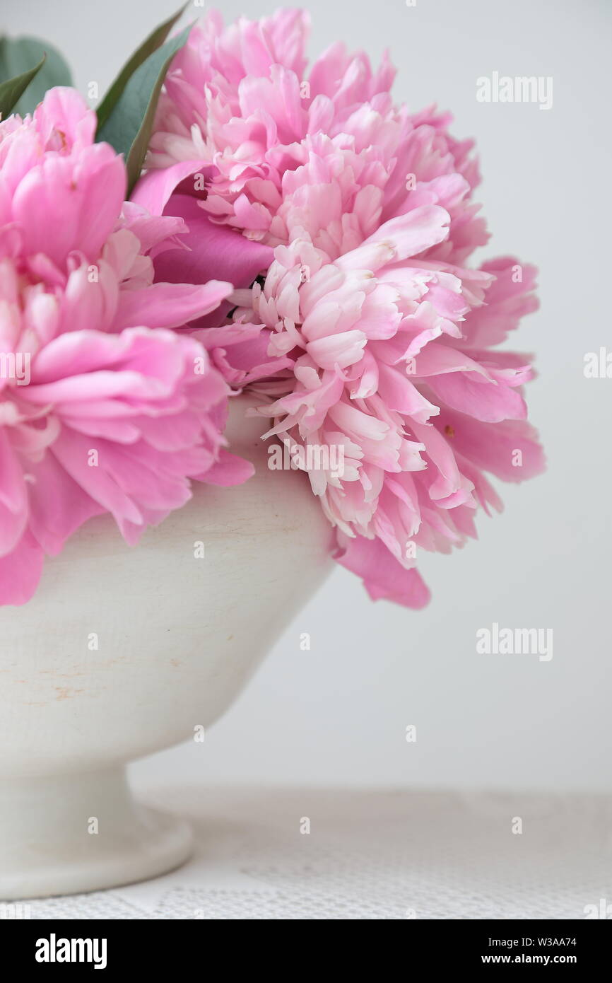Pink peony flowers in a white bowl on a white table. White background. Still life. Light morning light in white interior. Stock Photo
