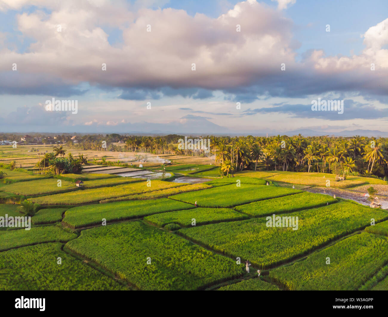 Rice Terrace Aerial Shot. Image of beautiful terrace rice field - Stock Image