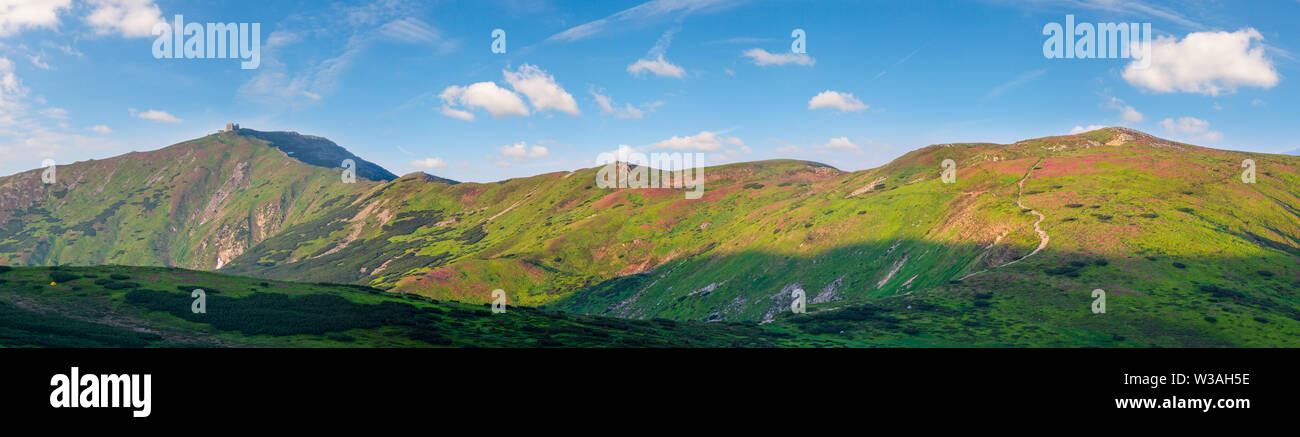 Pink rose rhododendron flowers on summer mountain slope. Carpathians panorama, Chornohora, Ukraine. - Stock Image