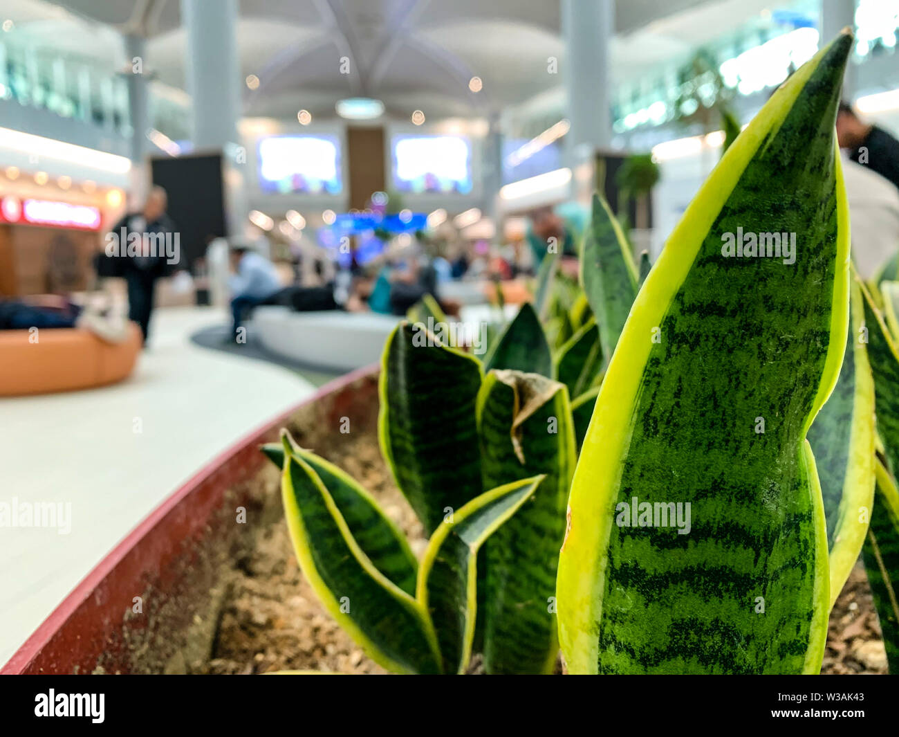 Resting area at an airport or shuttle bus area with blurred background. Selected focus on the plants. Concept of taking rest at a modern, green termin - Stock Image