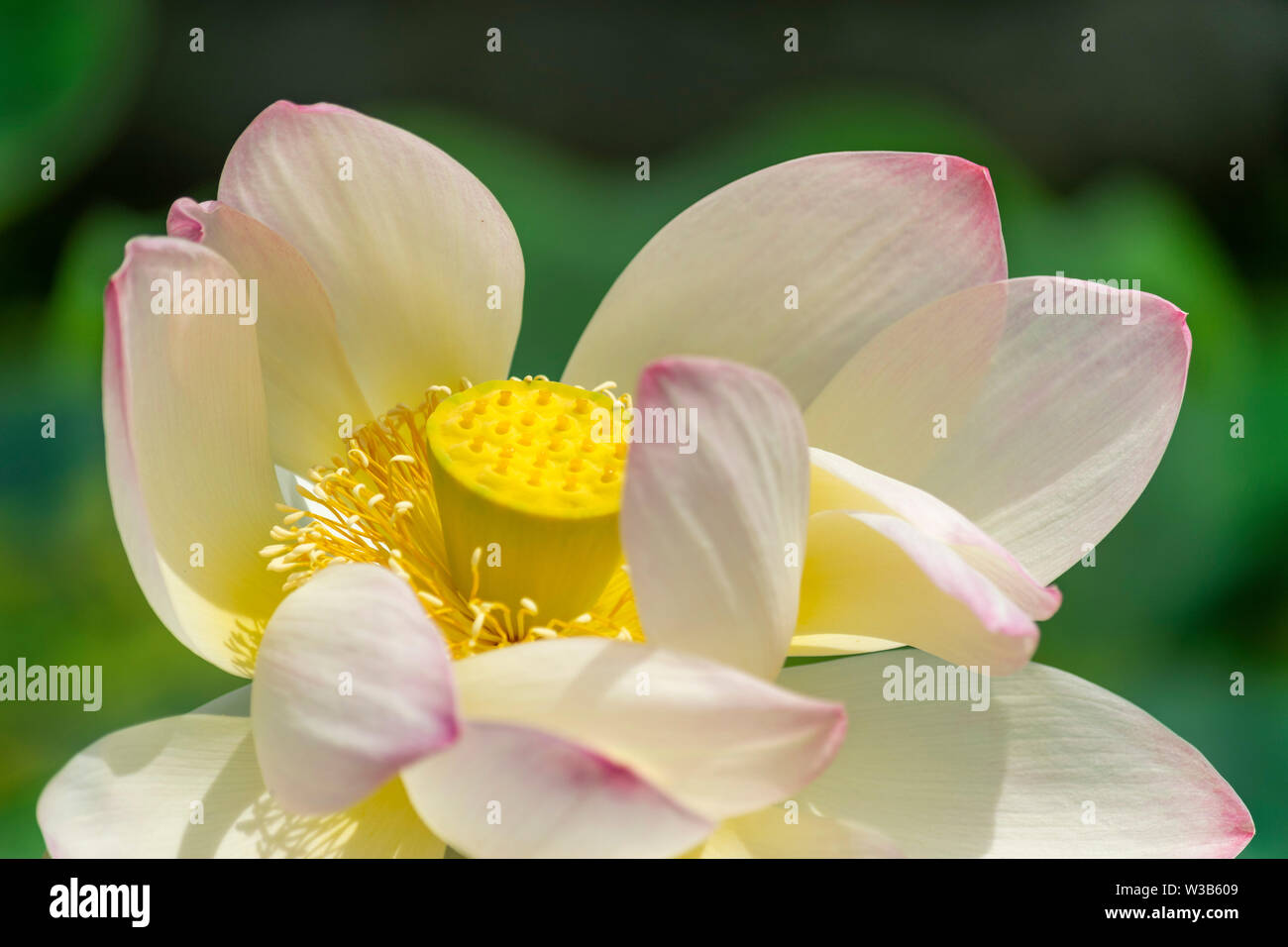 Small Flower Seeds Stock Photos Amp Small Flower Seeds Stock
