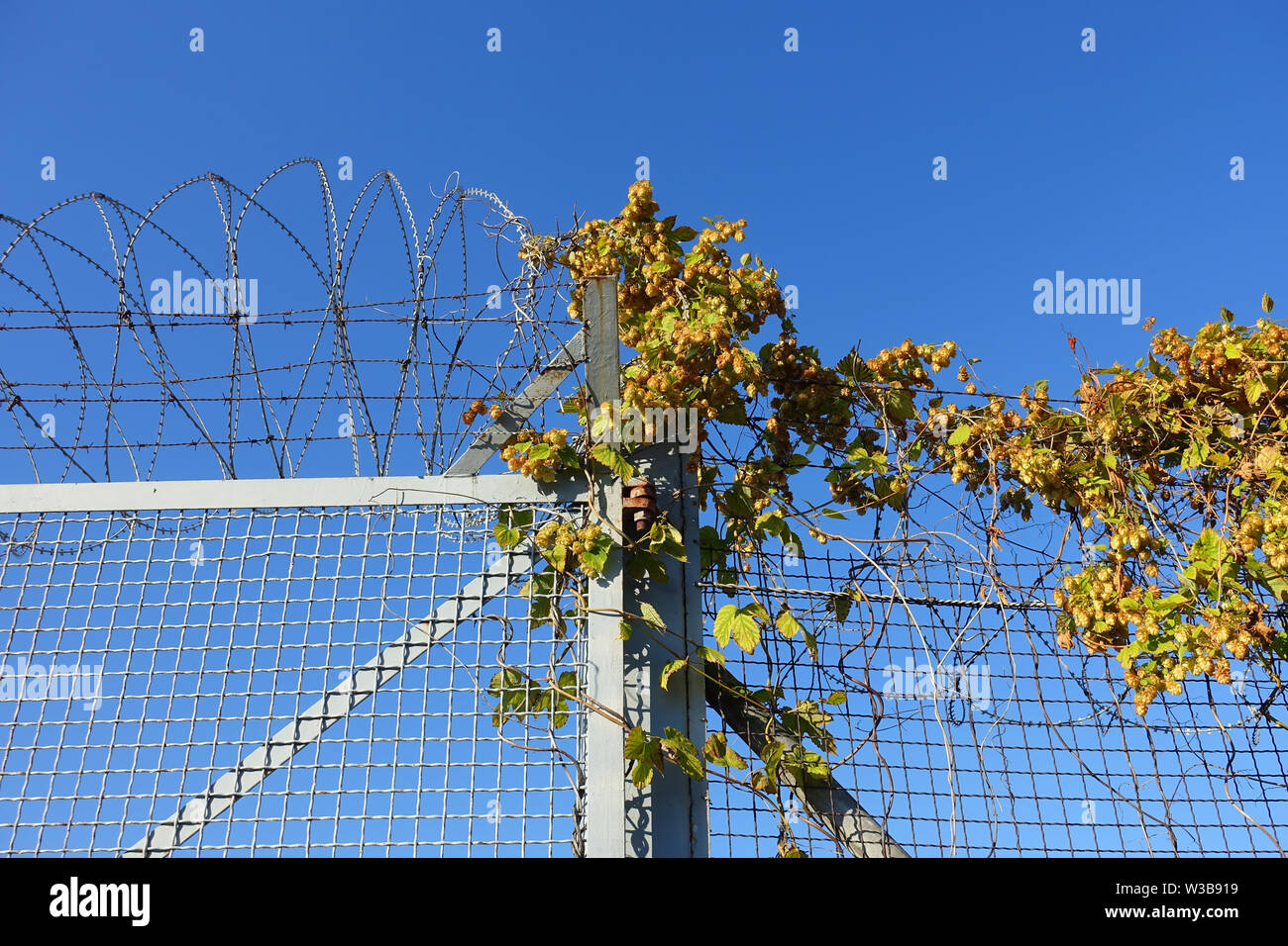 Border fence in Hungary - Stock Image