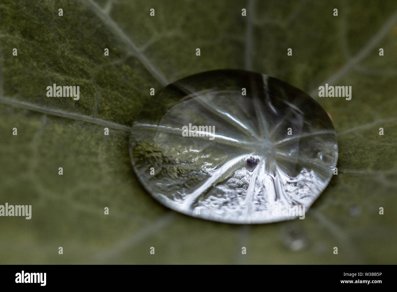 Rain drop on the leave. Close up macro abstract photo - Stock Image