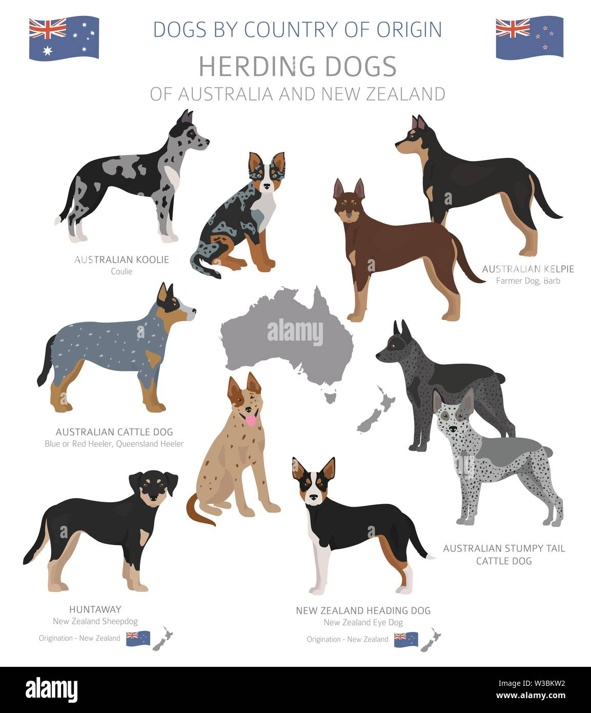Dogs by country of origin. Australian dog breeds. Shepherds, hunting, herding, toy, working and service dogs  set.  Vector illustration Stock Vector