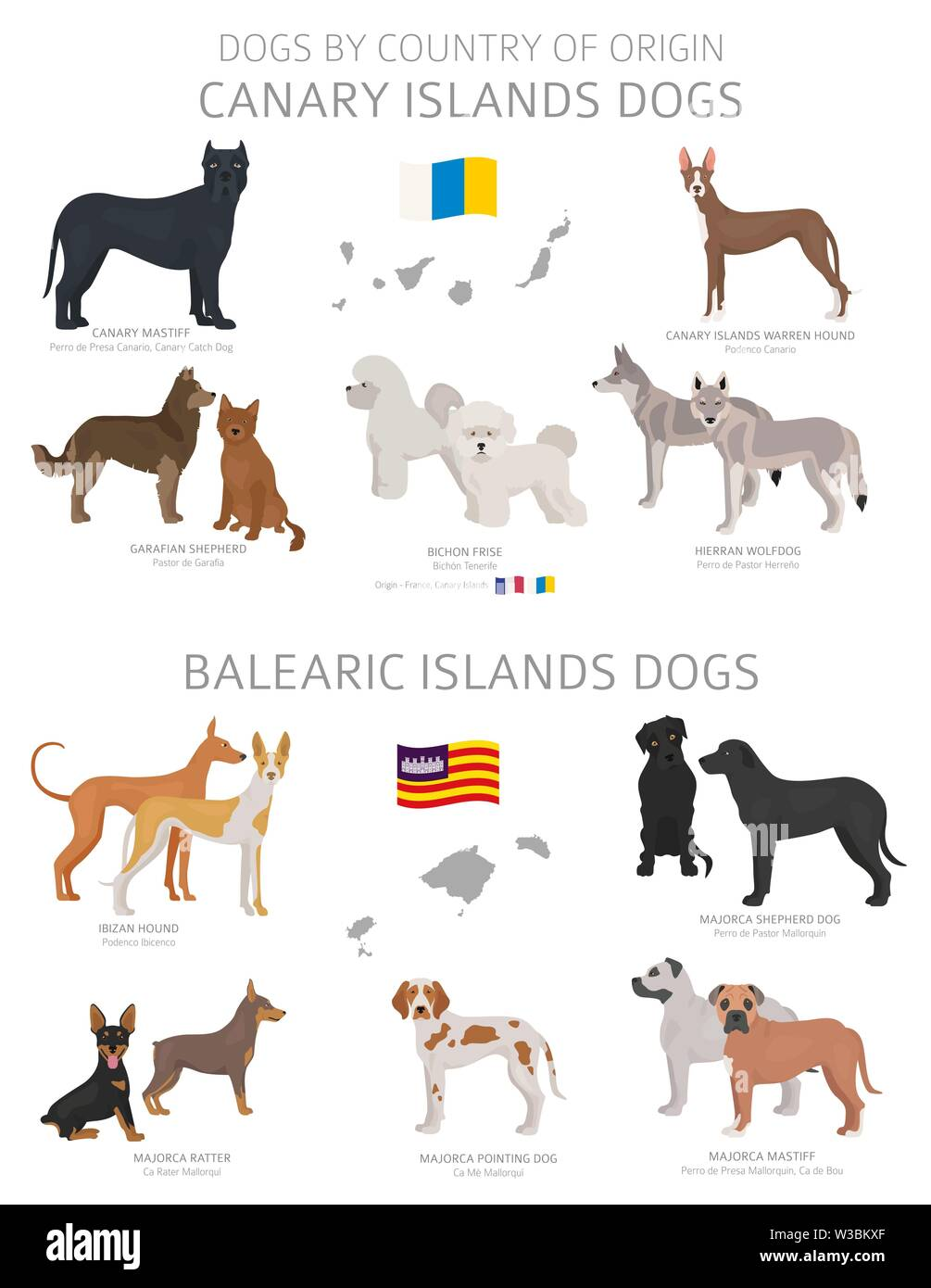 Dogs by country of origin. Canary and Balearic islands dog breeds. Shepherds, hunting, herding, toy, working and service dogs  set.  Vector illustrati - Stock Image