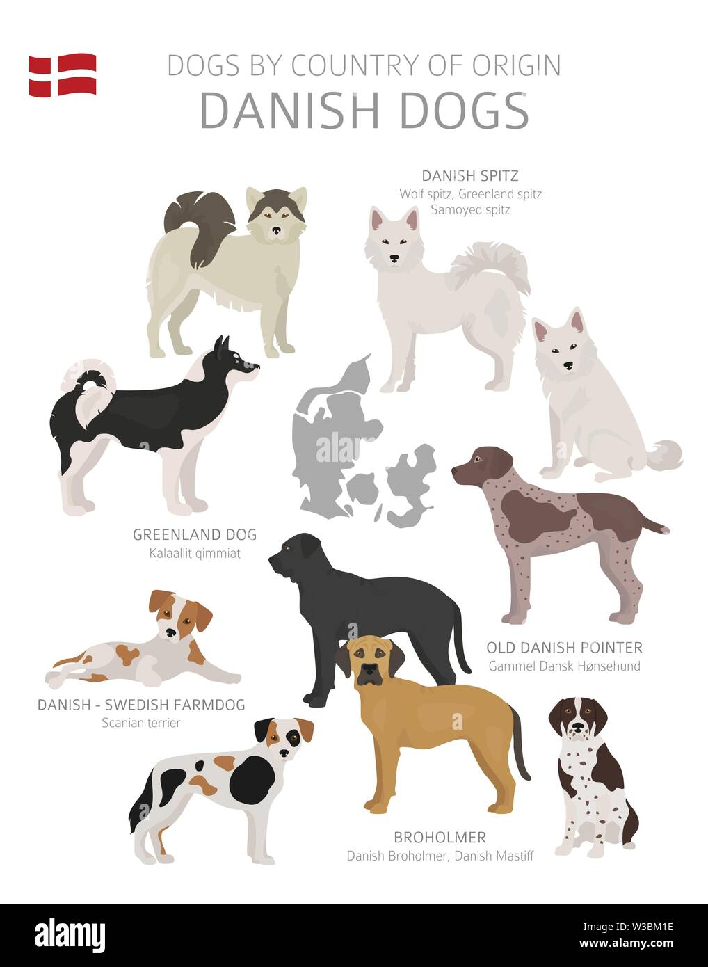 Dogs by country of origin. Danish dog breeds. Shepherds, hunting, herding, toy, working and service dogs  set.  Vector illustration Stock Vector