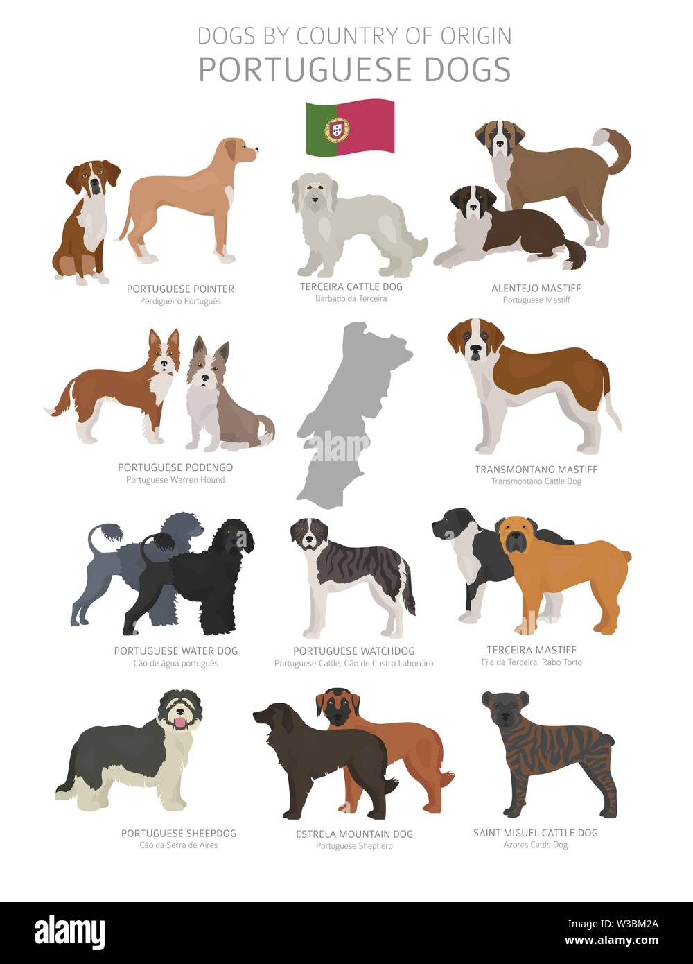 Dogs by country of origin. Portugal dog breeds. Shepherds, hunting, herding, toy, working and service dogs  set.  Vector illustration - Stock Image