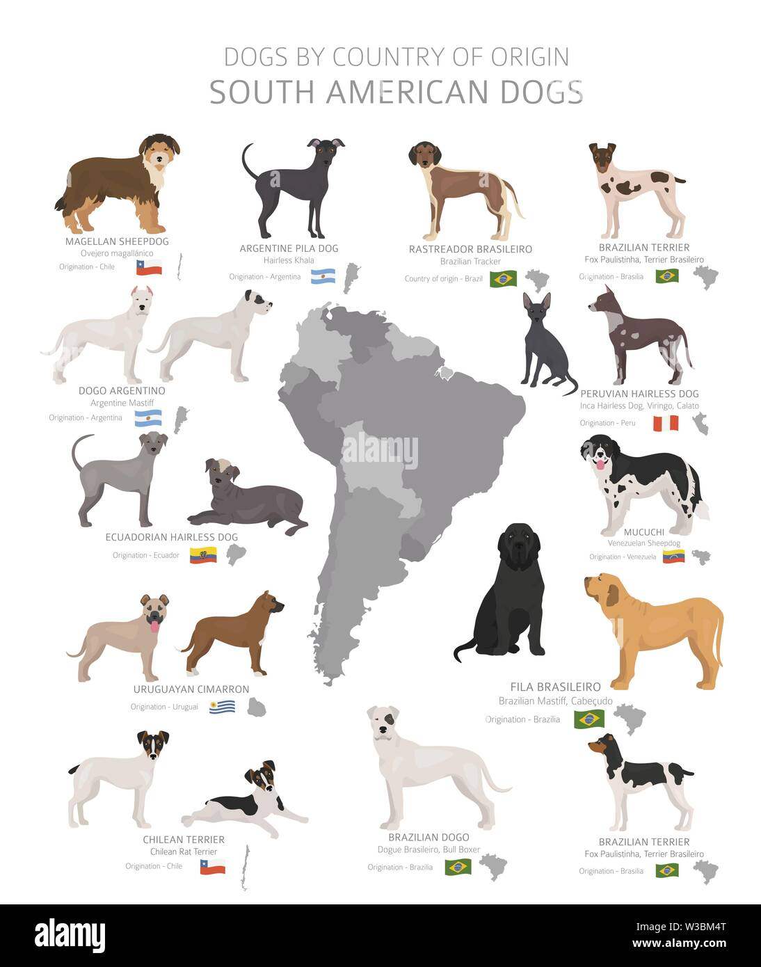 Dogs by country of origin. South American dog breeds. Shepherds, hunting, herding, toy, working and service dogs  set.  Vector illustration - Stock Image
