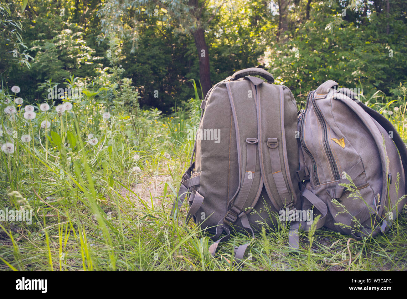 Two touristic backpacks on the green grass in the forest. Concept of travel and active lifestyle - Stock Image