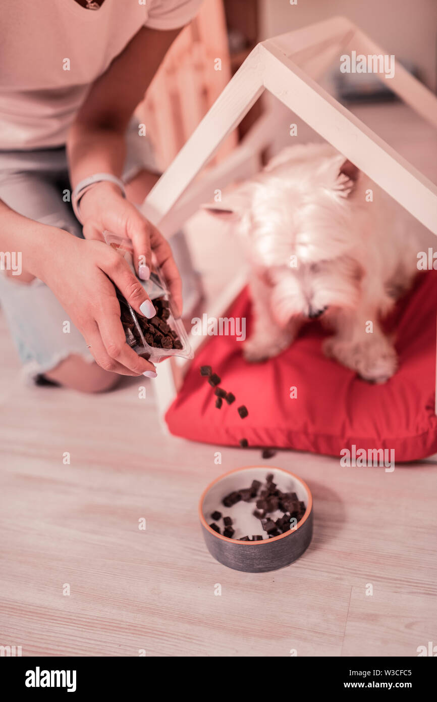 Putting some food. Close up of caring owner of cute dog putting some food into little bowl - Stock Image