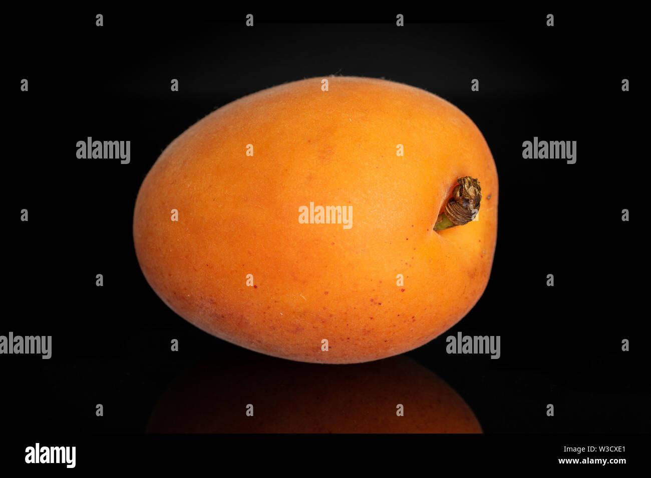 One whole velvety fresh deep orange apricot isolated on black glass - Stock Image
