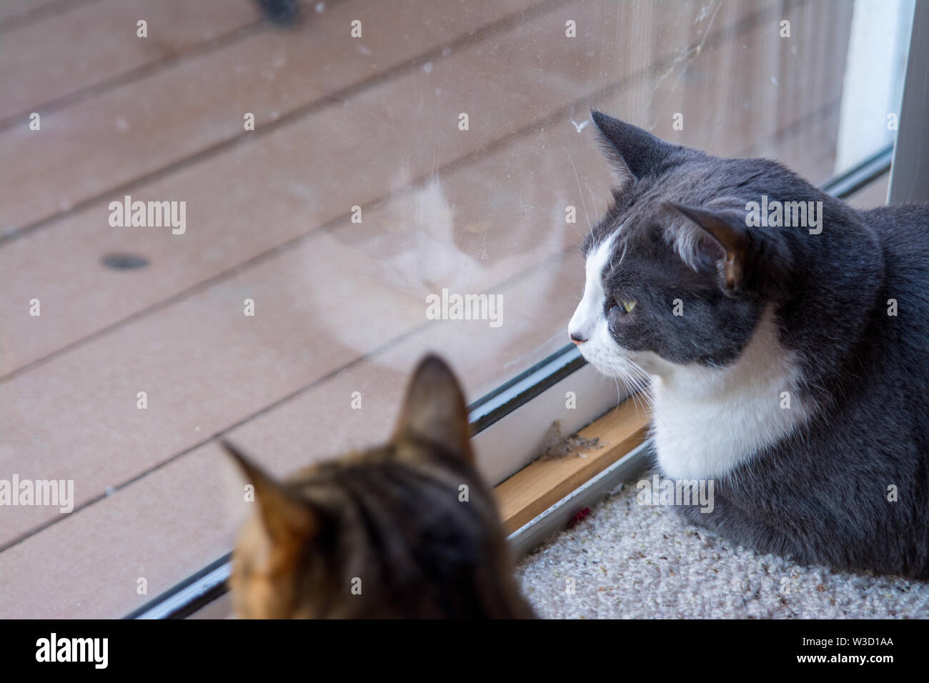 two cat friends looking out of window. - Stock Image