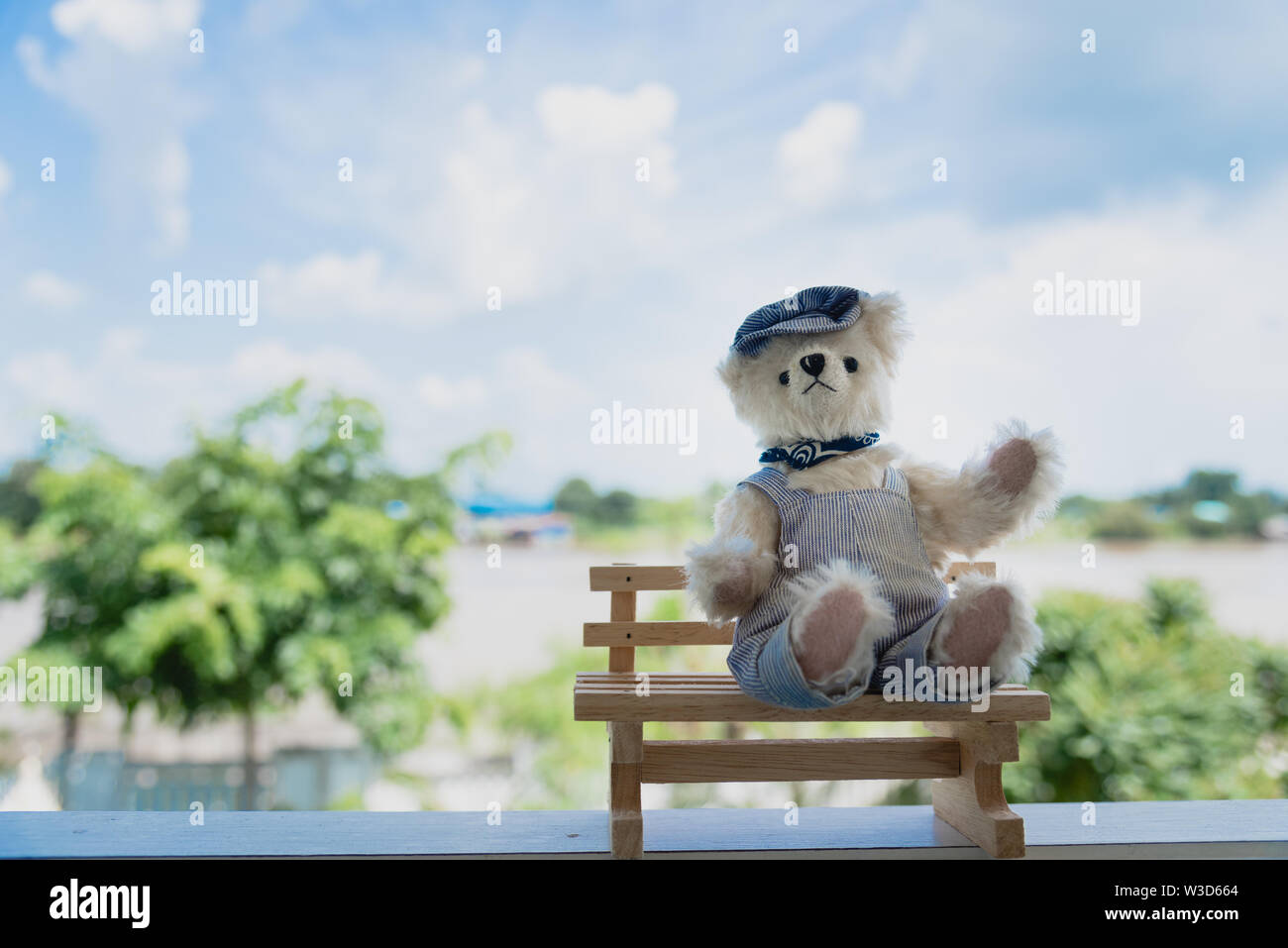 Vibrant outdoor photo of teddy bear sitting on the yard at the park with the white flower and green grasses - Stock Image