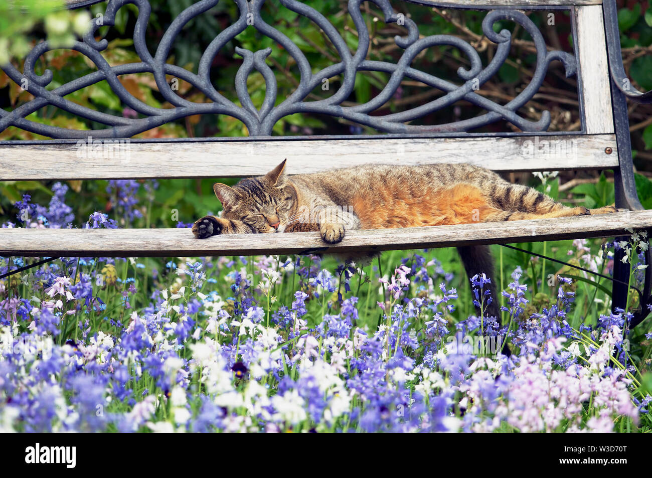 Tremendous A Mackerel Tabby Cat Felis Catus Sleeping On A Garden Inzonedesignstudio Interior Chair Design Inzonedesignstudiocom